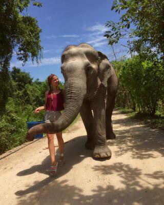 Elephants make the world a better place 🐘  #pmgy #pmgythailand