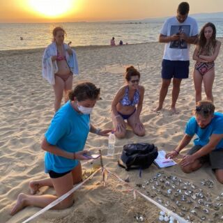 🚨 NEW PROJECT ALERT 🚨   Kefalonia, is an important breeding ground for loggerhead sea turtles. Sadly, there are many threats that push the sea turtles of Kefalonia closer to the brink of extinction. Both human and natural threats damage and destroy many of the eggs laid on the island's sandy beaches.  Through this inspiring initiative, international volunteers help protect and preserve the sea turtles of Kefalonia and their ecosystems. Practical measures to do this include surveying nesting beaches and protecting turtles' nests, This extends to monitoring the population's health, identifying threats and public awareness campaigns.  #pmgy #pmgygreece #pmgywildlife