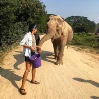 Today is World Elephant Day! 🐘⠀ ⠀ Do you love elephants as much as we do?⠀ ⠀ 🔎 Check out PMGY's opportunities to help protect these gentle giants⠀ ⠀ 🇱🇰 👉 http://bit.ly/sri-lanka-elephant-volunteers⠀ 🇹🇭 👉 http://bit.ly/thailand-elephant-volunteers⠀ ⠀ #pmgy #planmygapyear #pmgywildlife⠀